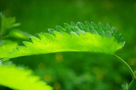 Jakie zioła pomagają na łysienie?