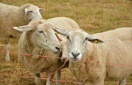 Elektryczne ogrodzenia pastwisk - zalety i wady