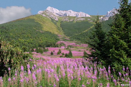 Długi letni weekend w słowackich górach