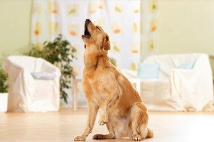 Dlaczego psy wyją? Czyli o strachu przed samotnościa.