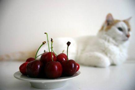 Miał? Coś Ty kotku miał? Czyli o żywieniu kota.