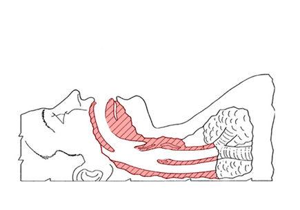 Anatomia chrapania