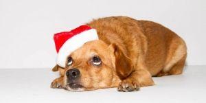 Jak wybrać świąteczny prezent