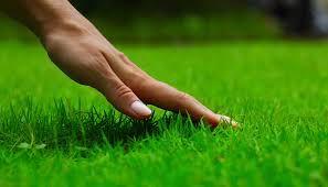 Nawożenie trawników i stosowanie nawozów