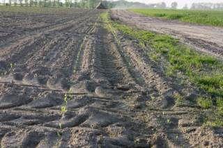 Jak przywrócić żyzność glebie?