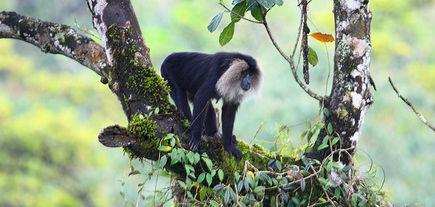 Park narodowy Sunderbans w Indiach