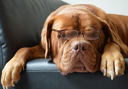 Rozród psów – o czym powinniśmy wiedzieć?
