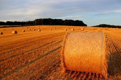 Inwestycja w działkę rolną - co sprawdzić przed zakupem gruntu?