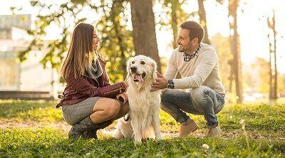 Kiedy i od czego zacząć tresurę psów? Szkoły dla psów dobre także dla szczeniaków