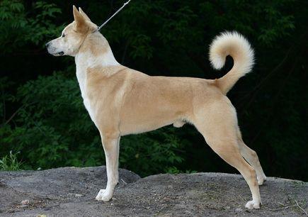 Wychowanie psa - jak nauczyć psa podawać łapę