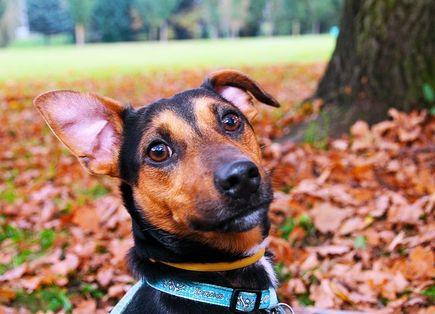 Co powinien jeść pies?