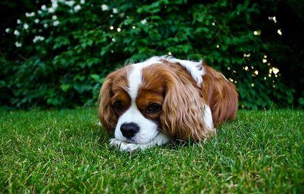 Psie odchody kością niezgody