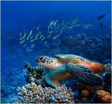 Malediwy – raj koralu