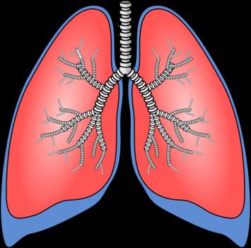 Jak działają płuca?