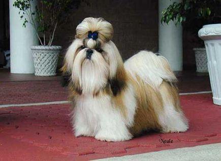 Najmodniejsze psie fryzury