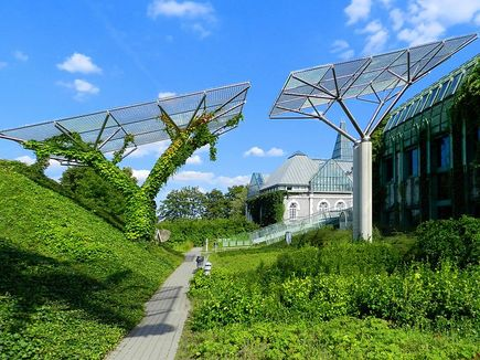 Czym oddycha miasto – zielone dachy