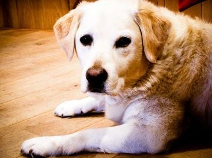 Czy wiesz co je Twój pies?