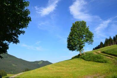 Jak zadbać o trawnik – 3 zasady