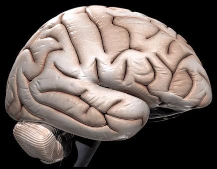 3 Sposoby aby odmłodzić mózg