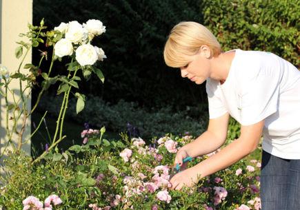 Ogród w stylu angielskim, czyli romantycznie zaprojektowany