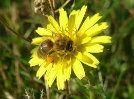 Co warto wiedzieć o propolisie - kicie pszczelim