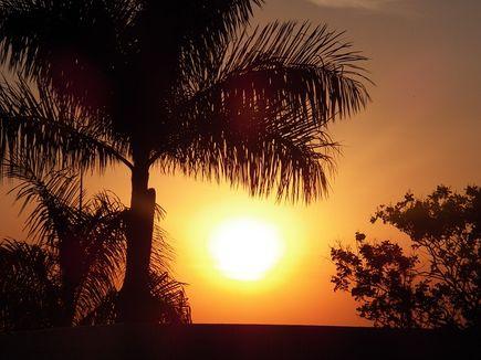 Olej z czerwonej palmy - obfitość karotenu