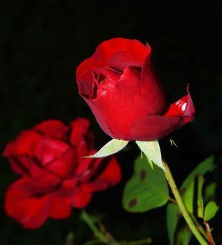 Kwiaty – jakie znaczenie wiąże się z kolorem i gatunkiem?