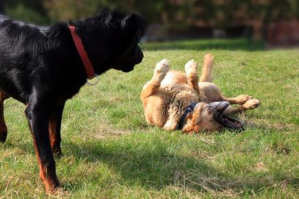 Sucha skóra u psów i kotów