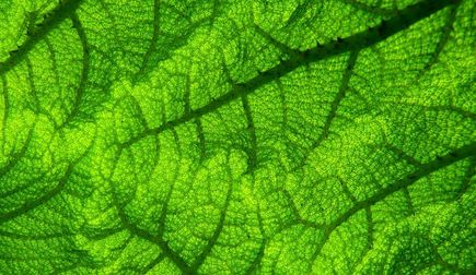 Jak dzielą się rośliny ogrodowe?