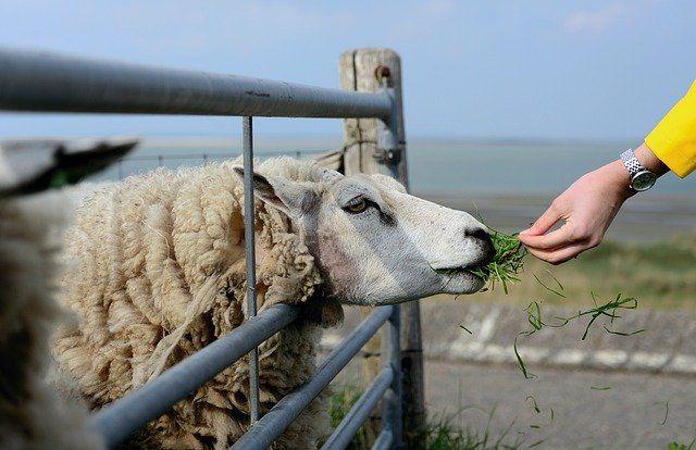 Dobrostan zwierząt gospodarskich
