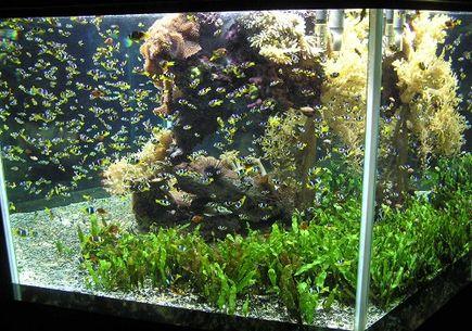 Jak organizować podłoże do akwarium roślinnego?