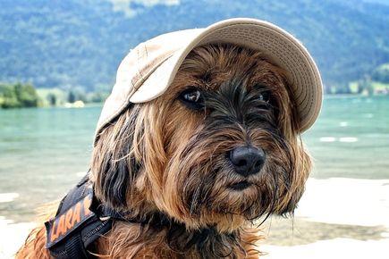 Gdzie warto wyjechać na wakacje z psem?