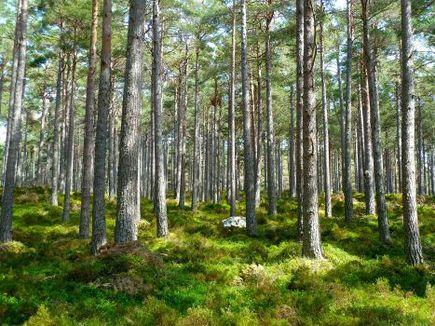 Fundusze unijne na ratunek środowisku!