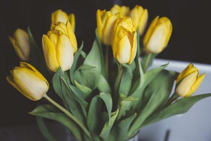 Kwiaty do biura jak je wybrać?