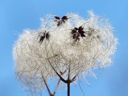 Jakie zalety posiada bawełna organiczna?