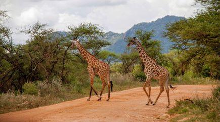 Chcesz wyjechać na wakacje do Kenii? Przygotuj się na moc atrakcji.