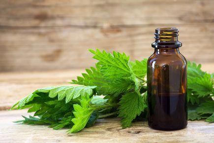 Fitoterapia - nowoczesne leczenie ziołami