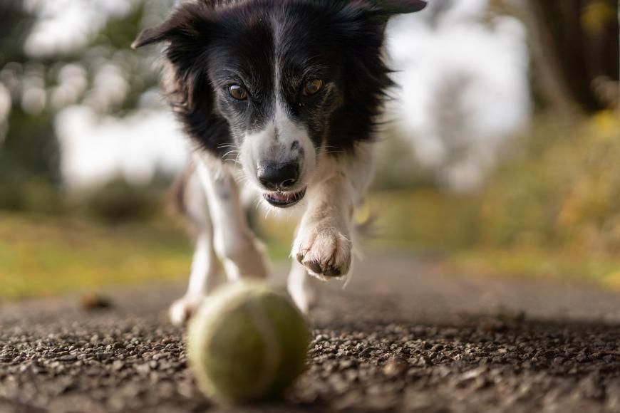 Wymagający pies? Aktywność fizyczna to nie wszystko!