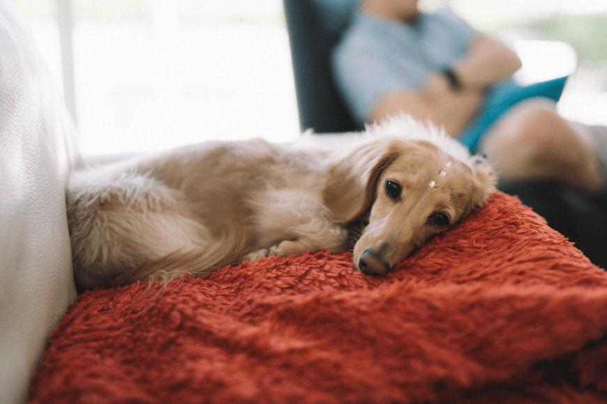 Jak zostać psim behawiorystą?