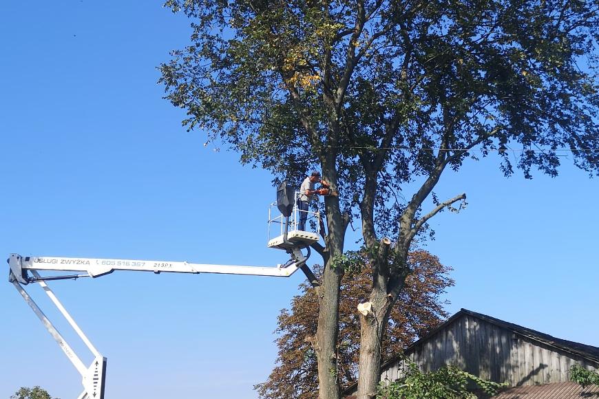 Co wpływa na stan i zdrowie naszych drzew?