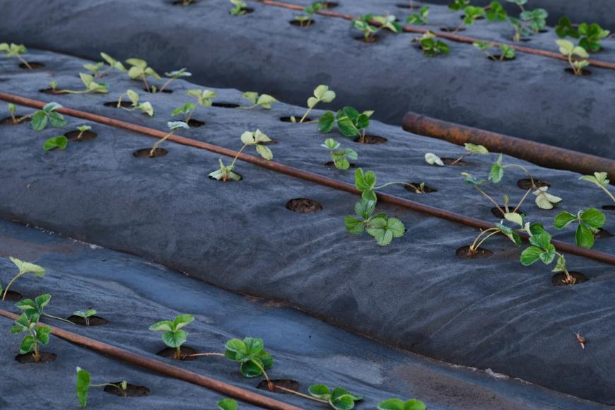 Co warto wiedzieć o agrowłókninie?
