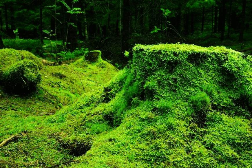 Słowiańska moc z natury
