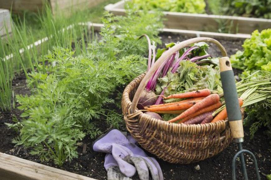 Ogród w domu czyli coraz bardziej popularny trend