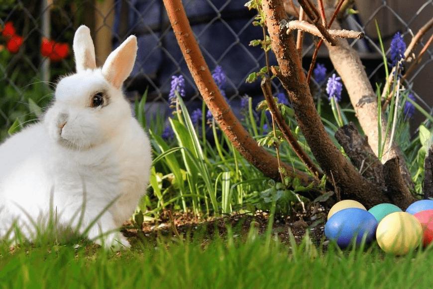 Jakie potrawy na Wielkanoc - co się je na Wielkanoc?