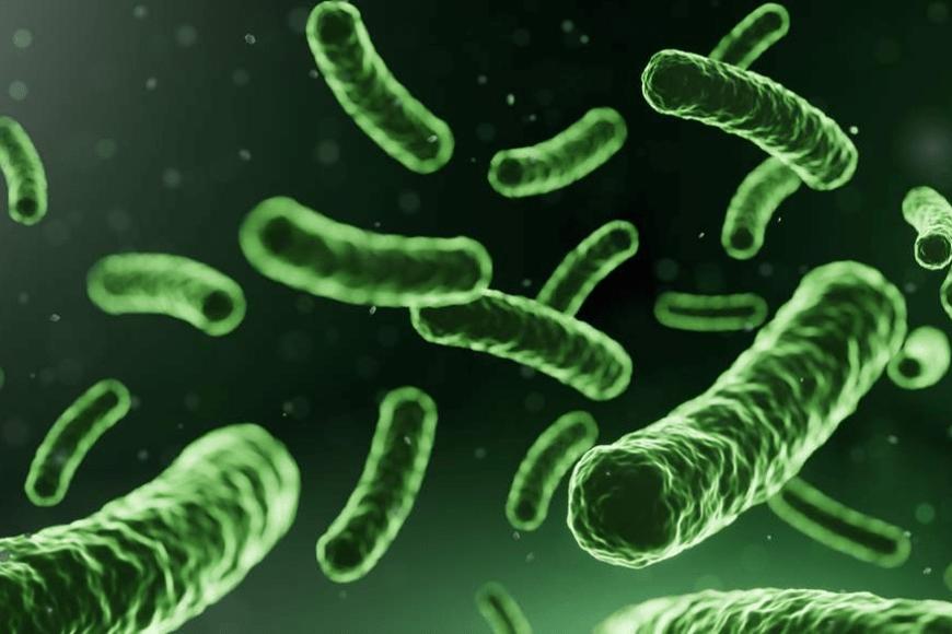 Probiotyk dla dorosłych – jaki wybrać?