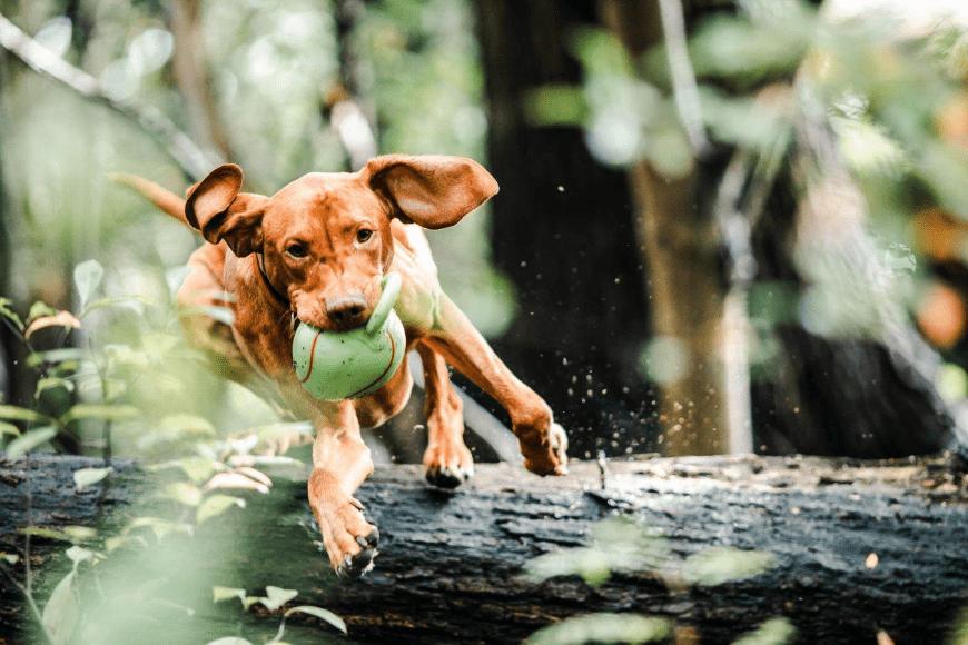 Jakie zabawki dla psa idealnie nadają się do wiosennych zabaw na świeżym powietrzu?