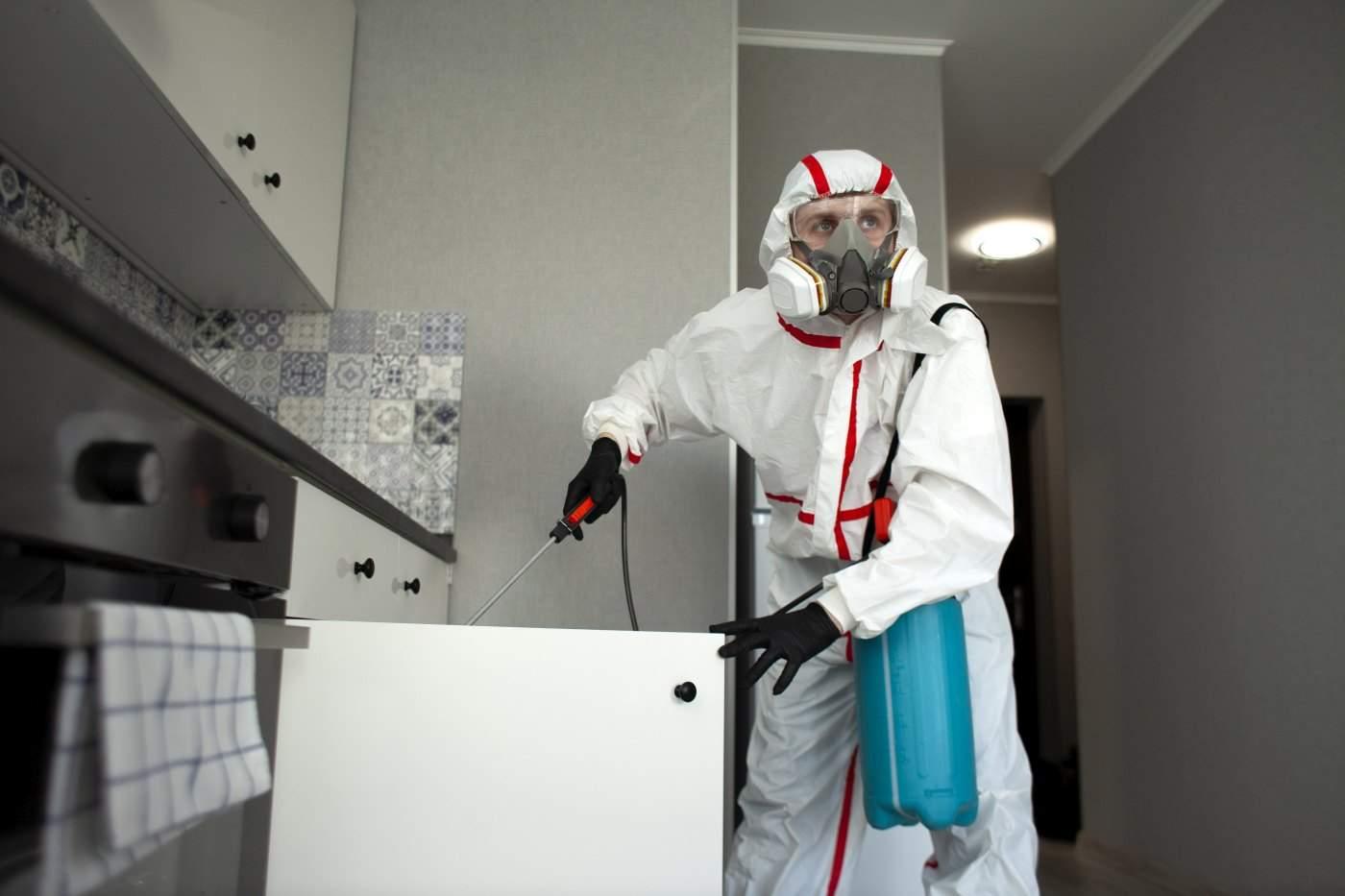 Zabezpieczenie sanitarne dla firm – DDD: dezynfekcja, dezynsekcja, deratyzacja