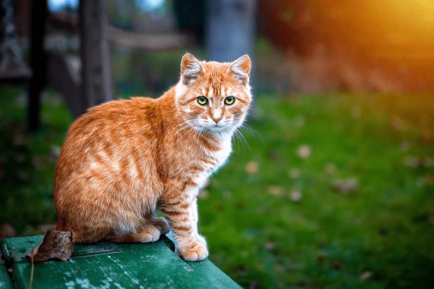 Jak długo żyją koty?