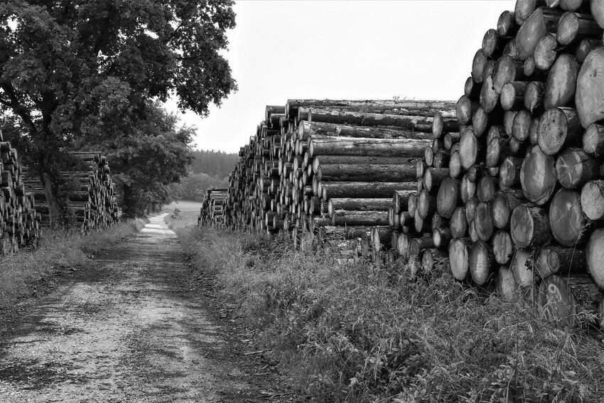 Przemysł leśniczy - rodzaje sprzętów specjalistycznych