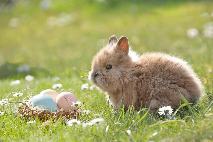 Pandemia pandemią, ale Wielkanocy się nie odwołuje!